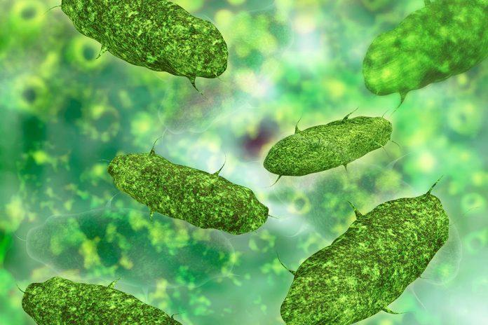 Repousser les bactéries, préserver le microbiote