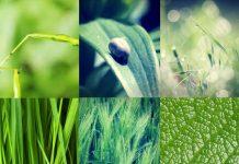 Déjouer la mystérieuse maladie de Lyme