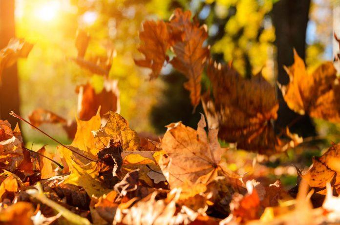 Déprime, fatigue, tristesse ? Goûtez aux huiles essentielles de l'automne
