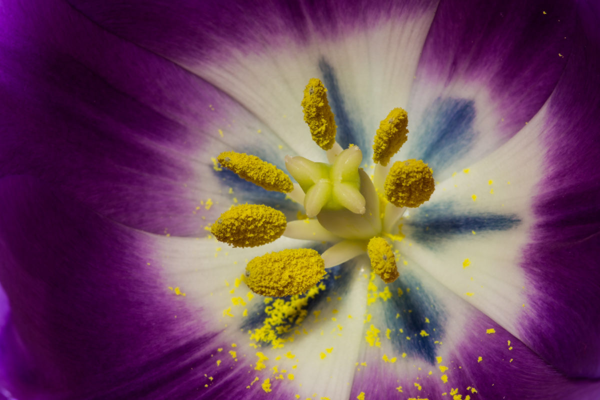 Pollens huiles essentielles et allergie saissonière