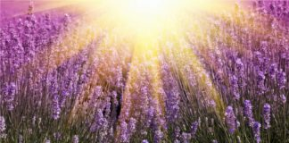 Huiles essentielles brulure et coupes de soleil