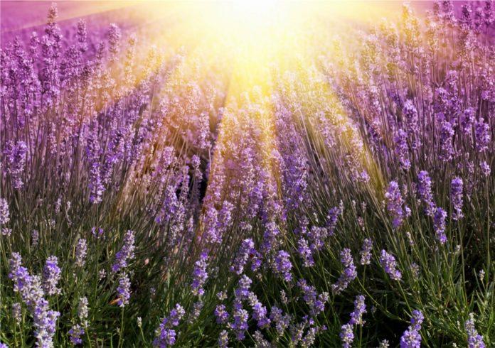 Br lures coups de soleil les huiles essentielles en urgence amsoam by aude maillard - Huile essentielle coup de soleil ...