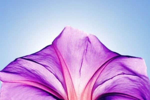 syndrome-premenstruel-huiles-essentielles-aromatherapie