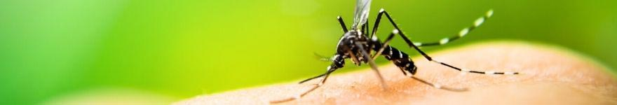 10 huiles essentielles pour le voyage moustiques
