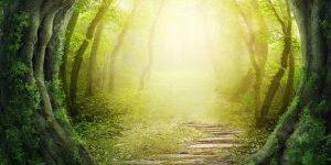 Les mycoses : des traitements par les huiles essentielles curatifs et préventifs